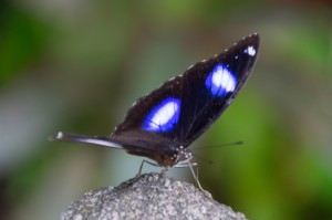 papillon butterfly park
