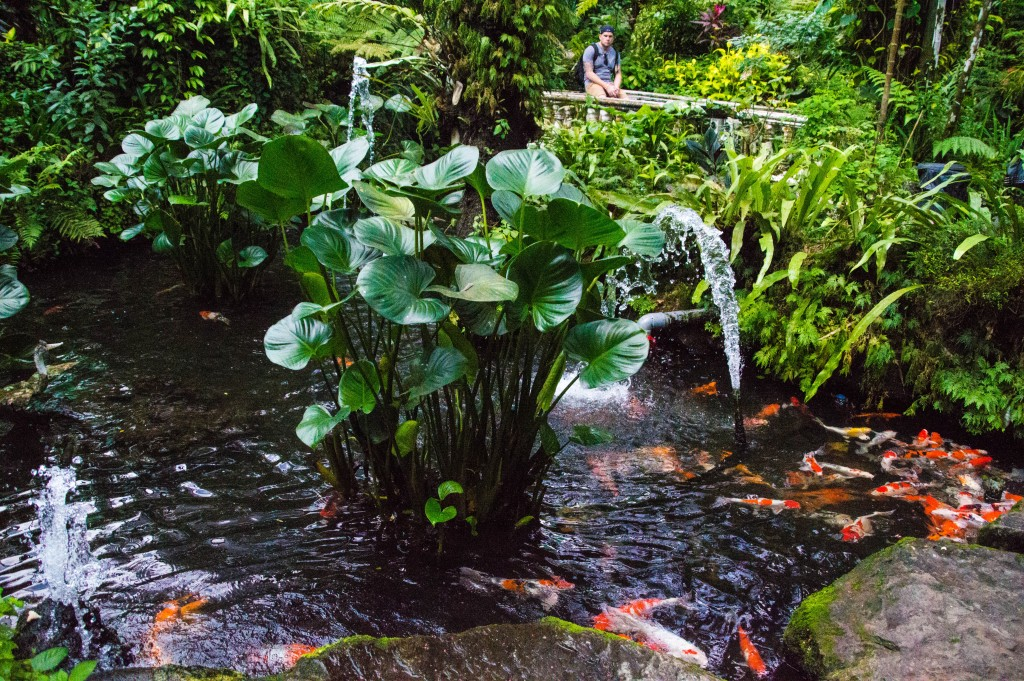 poisson butterfly park