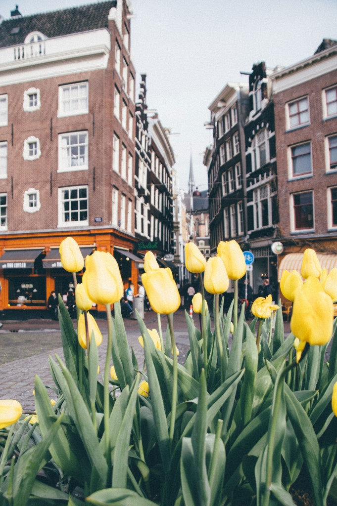 tulipes amsterdam