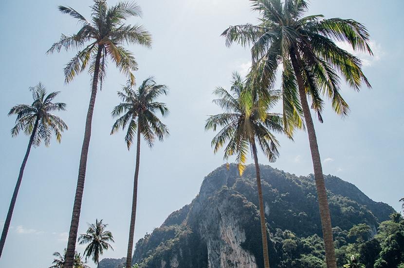 palmiers ko-phi phi