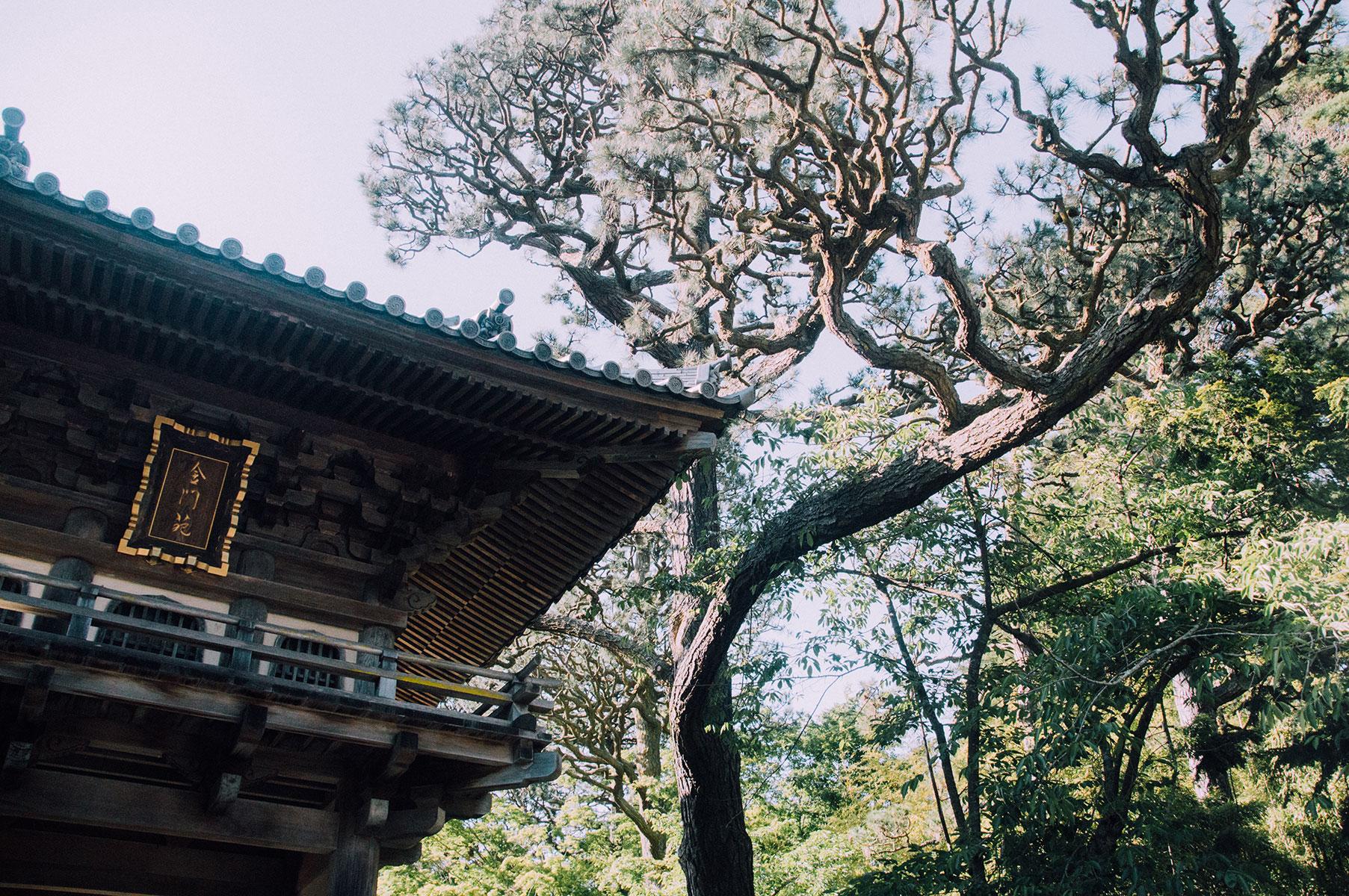 japanese-park-san-francisco