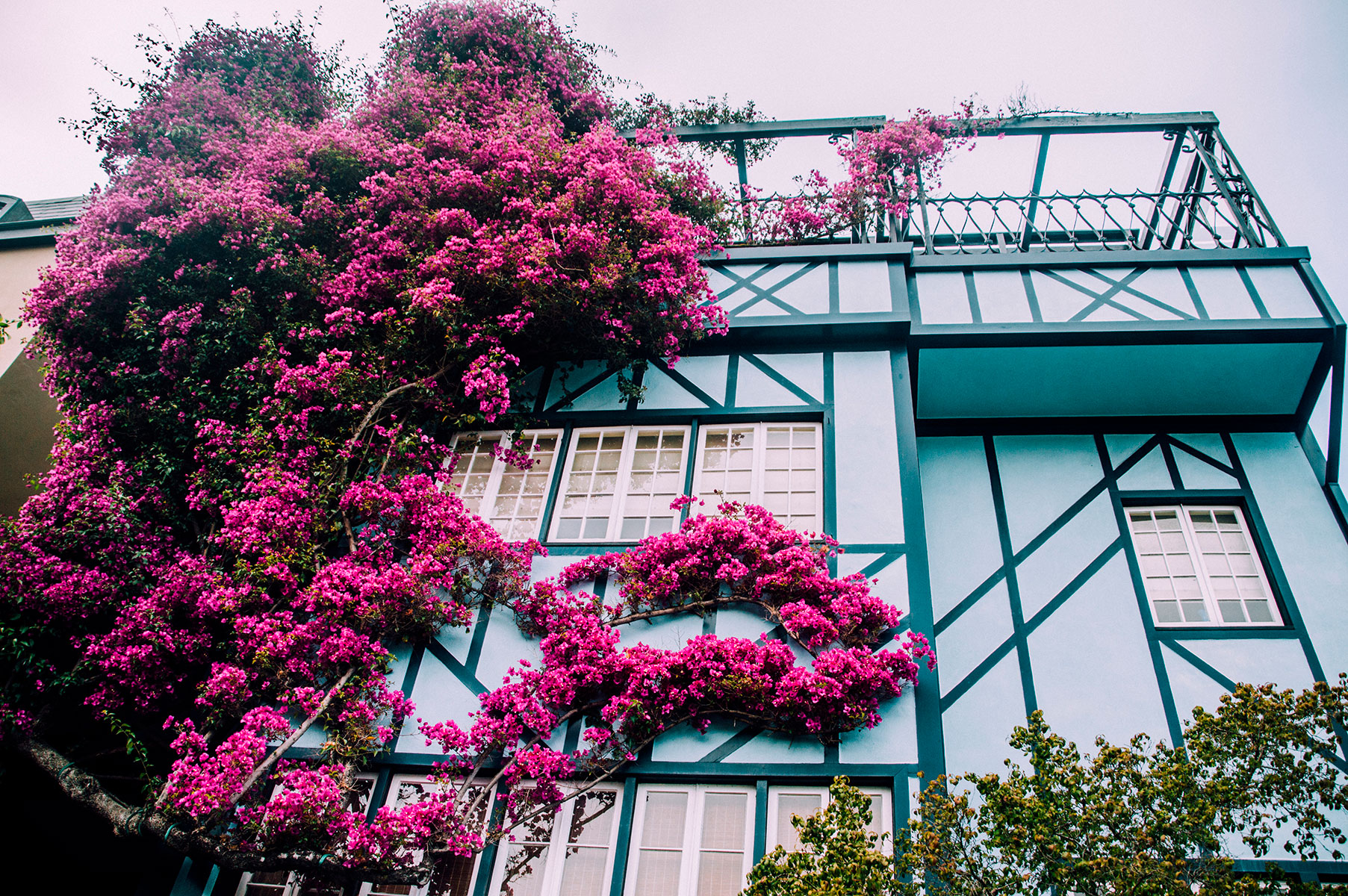 Maison fleurs lombard street san francisco