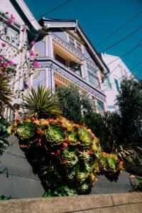 maison violette san francisco
