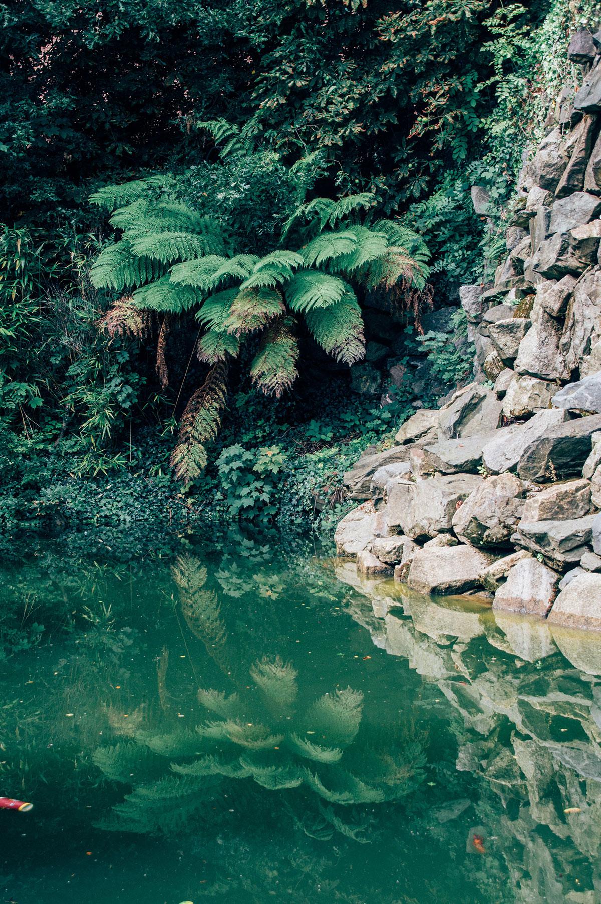 dublin_iveagh-garden
