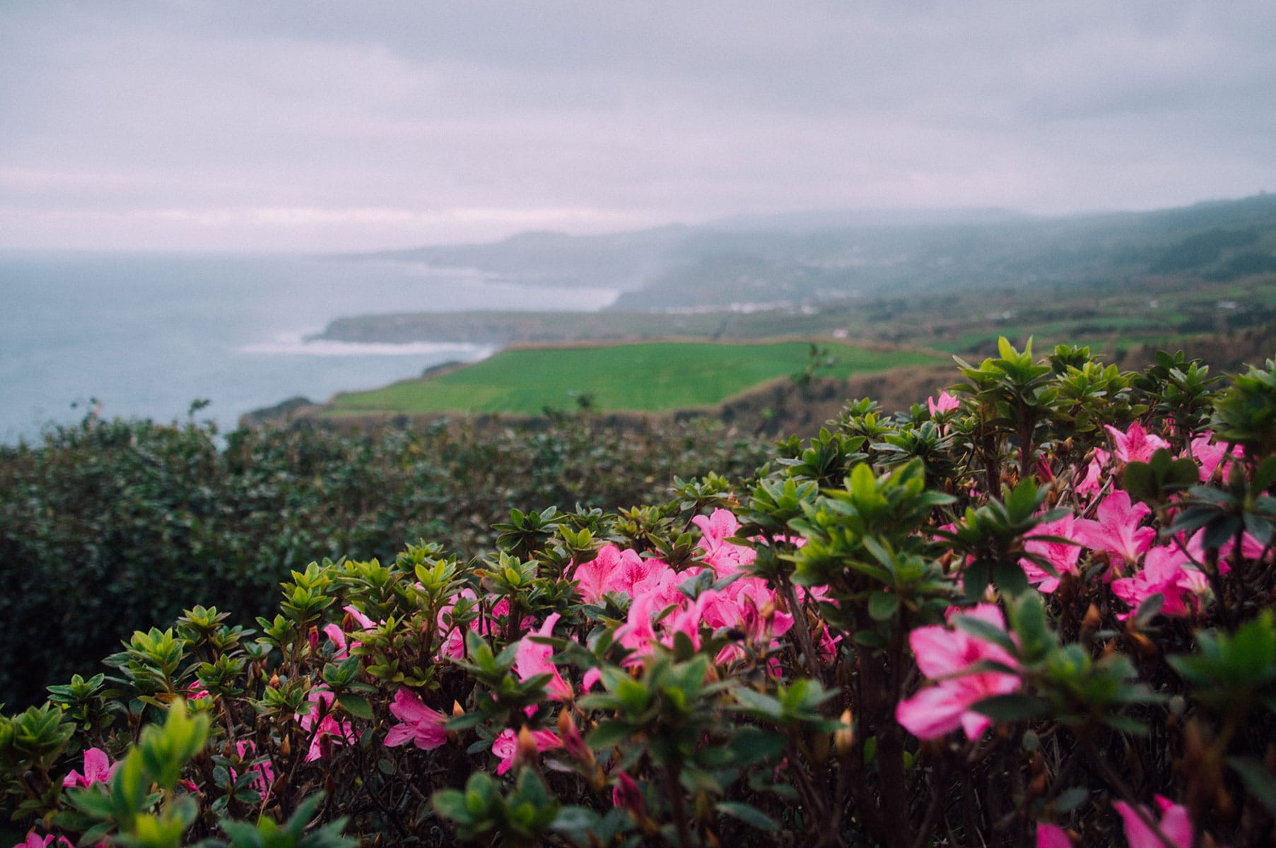 falaise fleurs sao miguel