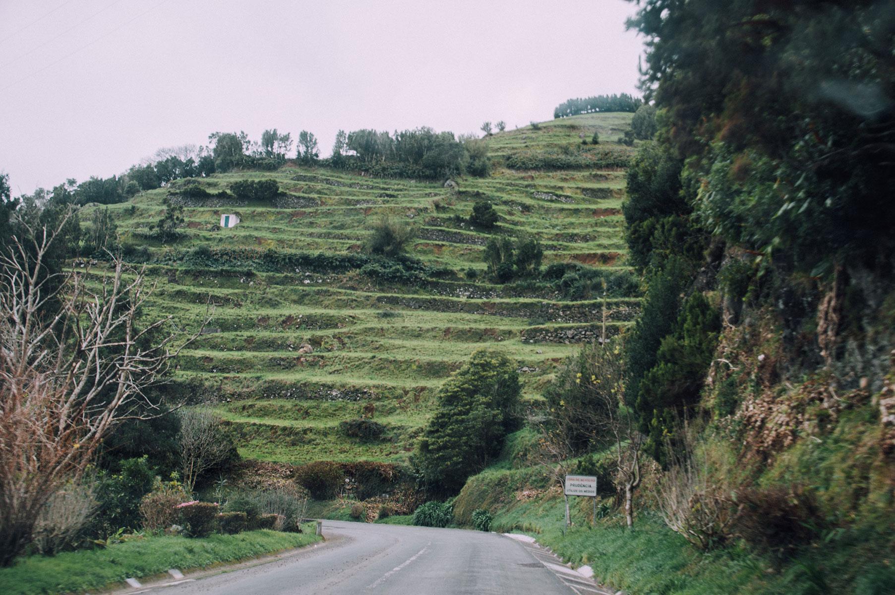 plantation thé sao miguel