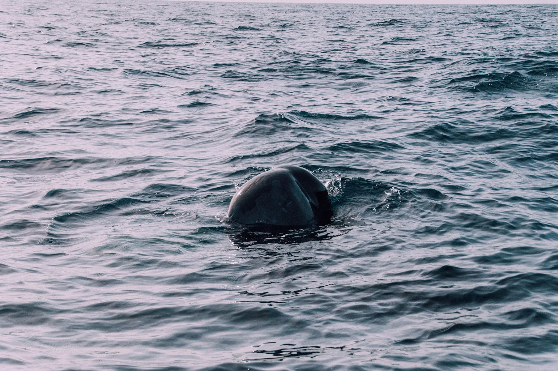 voir baleine Sao Miguel