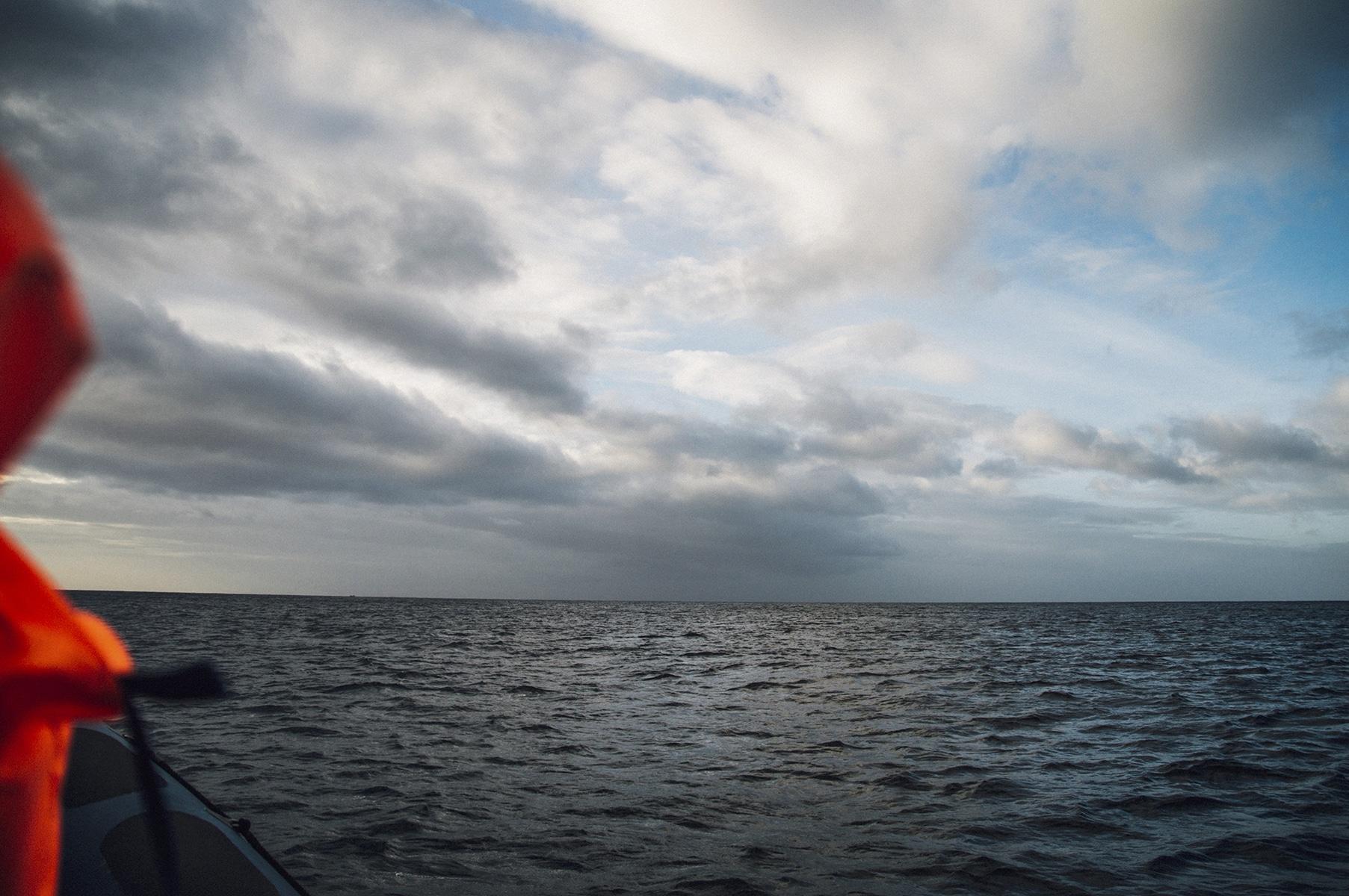 açores observer baleine